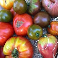 Världens goaste tomater