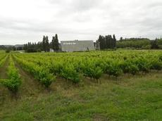 Vi vandrar längs vinodlingar