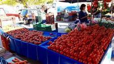 Härliga tomater på marknad i Erimioni