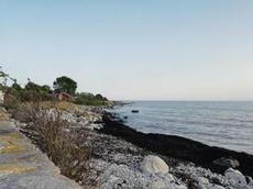 Tång i strandkanten