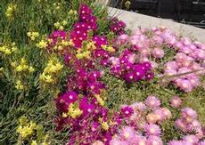 Härlig blomsterprakt
