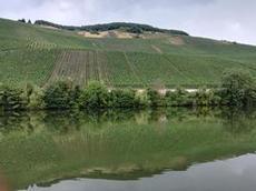 Vinodlingar längs Mosel