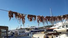 Bläckfiskar på lina