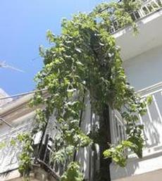 Vindruvor på fasad