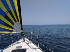 Fin segling med spaning efter delfiner