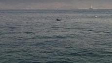 Ett stim av delfiner mötte oss i Ria de Vigo