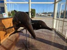 Äntligen fångat delfinerna på bild