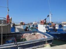 Fiskehamn med mängder av fiskebåtar